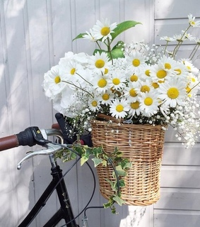 bicycle, summer and cute