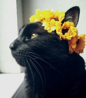 tumblr, yellow and cat