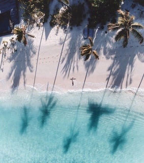 Hot, ocean and palms