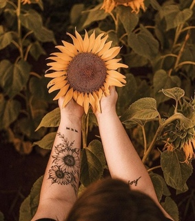 sunflowers, Tattoos and nature