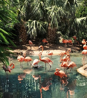 flamingo, forest and pink