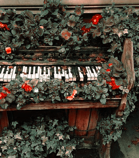 aesthetic, piano and flowers