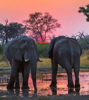 Animales, atardecer and elefante
