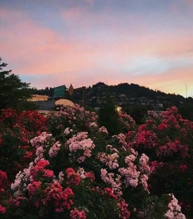 aesthetic, beauty and flowers