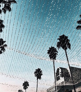 palm trees, places and summer