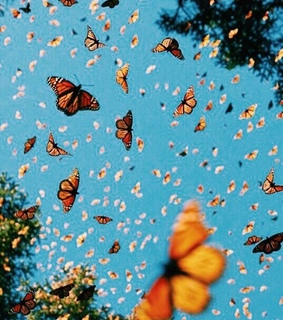 aesthetic, monarchs and beautiful