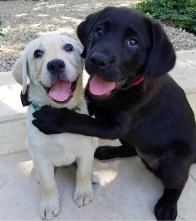 puppies, lovely and hugs