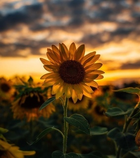goals, photography and sunflowers