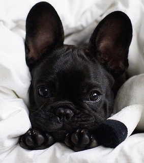 photographyinspiration, puppy and cute