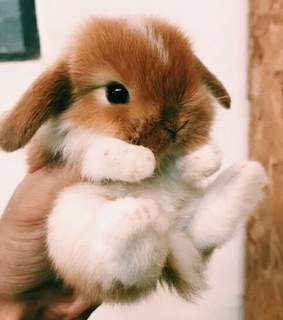 animals, bunny and cute