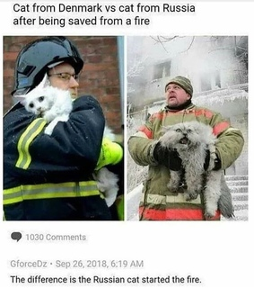 cats, fire and funny