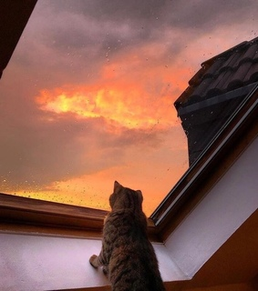 cat, pictures and sunset
