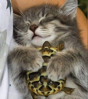 Animales, Tortuga and cute
