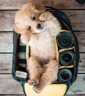 dogs, perros and cute