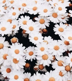 aesthetic, beauty and daisy