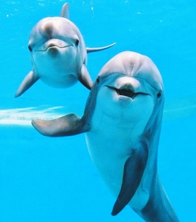 summer, dolphins and blue