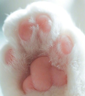 background, iphone and paw