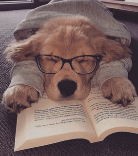 book, cute and glasses