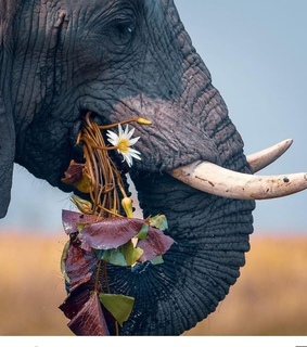 photography, flowers and elephants