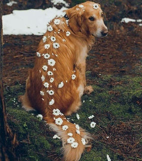 dogs, photography and flowers