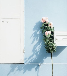 flowers, home and inspiration