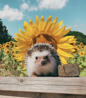 love, sunflowers and cute