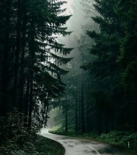 way, amazing and trees