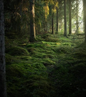 wilderness, photography and forest