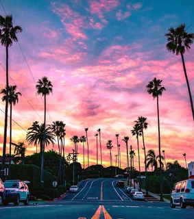 sky, palm trees and photography
