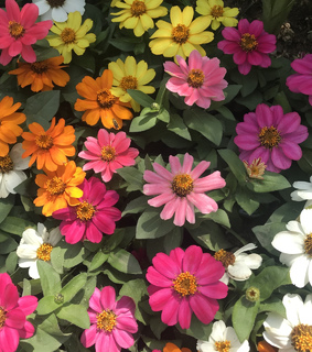 flower, sobeautyful and colorful