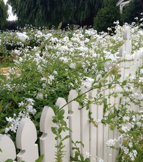 fence, cottagecore and flowers