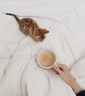 inspiration, coffe and pet