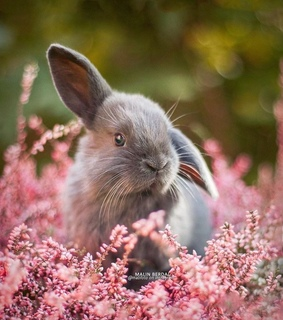 flowers, bunny and pet