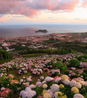 blooming, landscape and clouds
