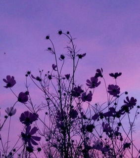 violet, purple and aestetic