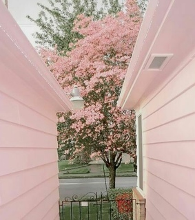 pink flower, pink house and pink