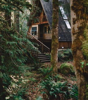 house, forest and nature