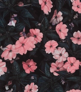 nature, pink and flowers