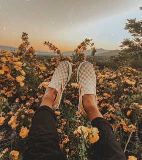 checkered, flowers and sunset