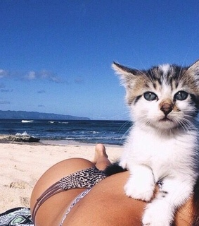 cute, aesthetic and animal