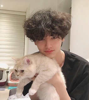 aesthetic, cute and cat