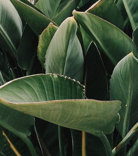 plant, leaf and nature