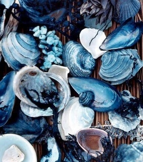 shell and blue