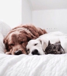 cute, sleeping and dogs