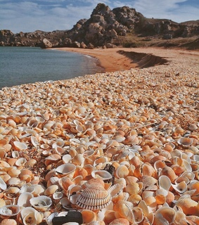 shell and sea