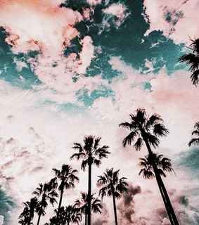 tree, palm trees and trees