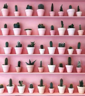 cactus and pink
