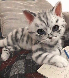 animals, cute and cat