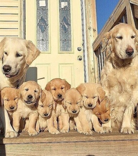 dogs, puppies and cutedog