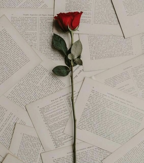 libros, wallpapers and rosas